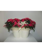 Stelle di Natale in vaso