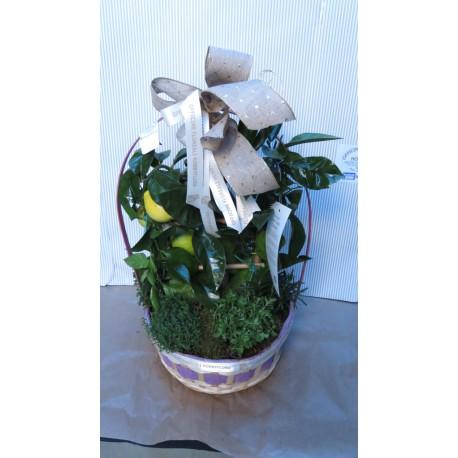 Composizione con pianta di limone a parete e piante - Piante regalo ...