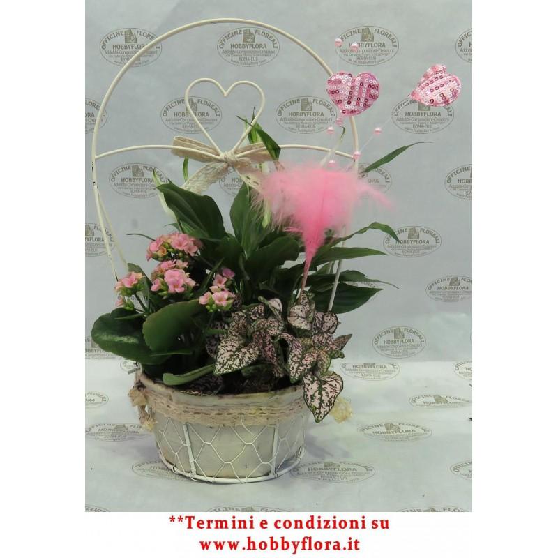 Cestino con composizione di piante hobby flora for Piante da interno piccole