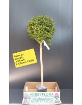 Bosso ad alberello artificiale - altezza 120 cm
