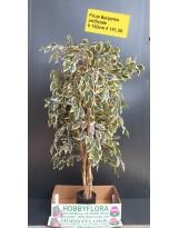 Ficus Benjamin artificiale - altezza 150 cm